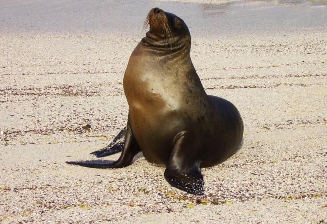 Pozdrav s Galapagosa