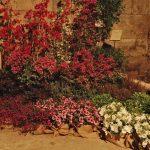 cvijece 010