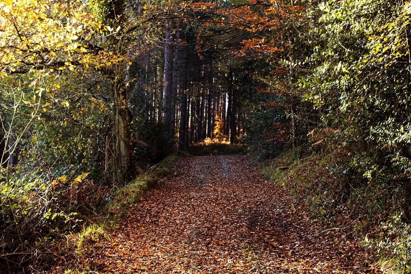 Svjetski dan šuma, 21. ožujka, čuvajmo naše šume
