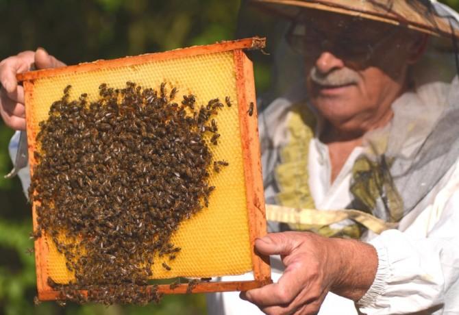 Pčelarstvo – ljubav prema pčelama