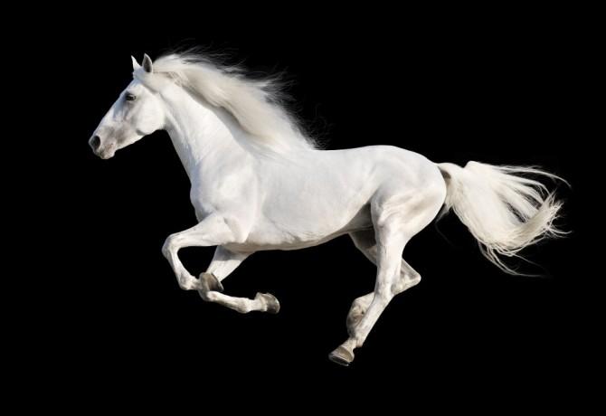 Konji – važna uloga u ljudskoj povijesti