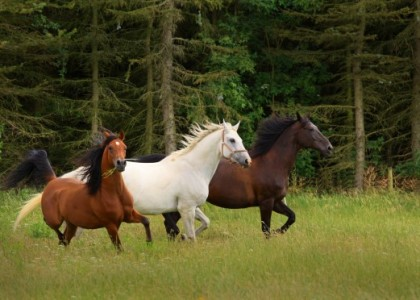Interesting things you didn't know about – horses