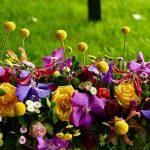 Objavljen program ovogodišnjeg Floraarta