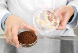Kava uzgojena u bioreaktoru! Sad je možemo uzgajati bilo gdje!
