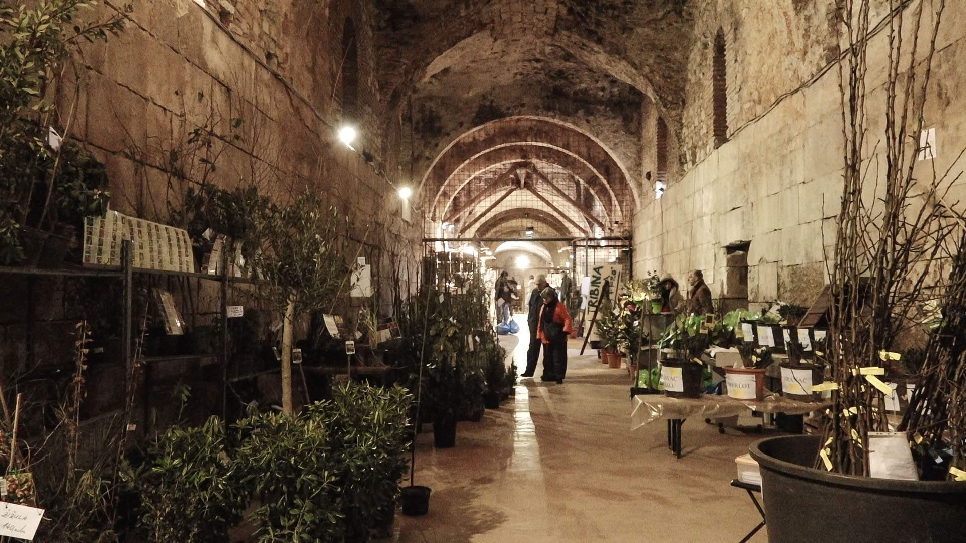 Biljke i sadnice u Dioklecijanovim podrumima