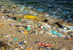 Petini zemalja u svijetu prijeti urušavanje ekosustava s ozbiljnim posljedicama