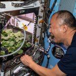 """Astronauti prvi """"gricnuli"""" rotkvice uzgojene u svemiru: Čak su i bolje od onih kod kuće"""